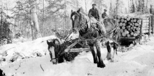 A skidder horse up to its nose in snow.
